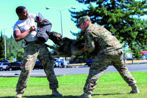 Staff Sgt. Adam Serella (right) and Spc. Bruce Brickleff (left), both military working dog handlers with the 95th Military Police Detachment, 504th MP Battalion, 42nd Military Police Brigade, demonstrate the focus and strength of Serella's new MWD, Greco, by lifting him off the ground while he continues working on his bite during a training session on, Joint Base Lewis-McChord, Wash., July 29, 2015. Serella and Greco have only been working together a short time, but Serella said he is confident his new dog has what it takes to pass certification at the end of August.